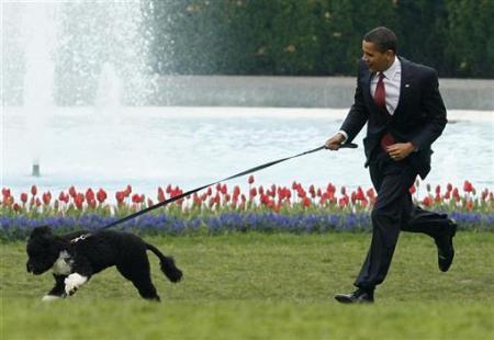 http://1.bp.blogspot.com/_Om0YxyZyKVk/TEoXQRrTO2I/AAAAAAAABgY/H2zz524rH7g/s1600/Bo-Presidential_Dog.jpg