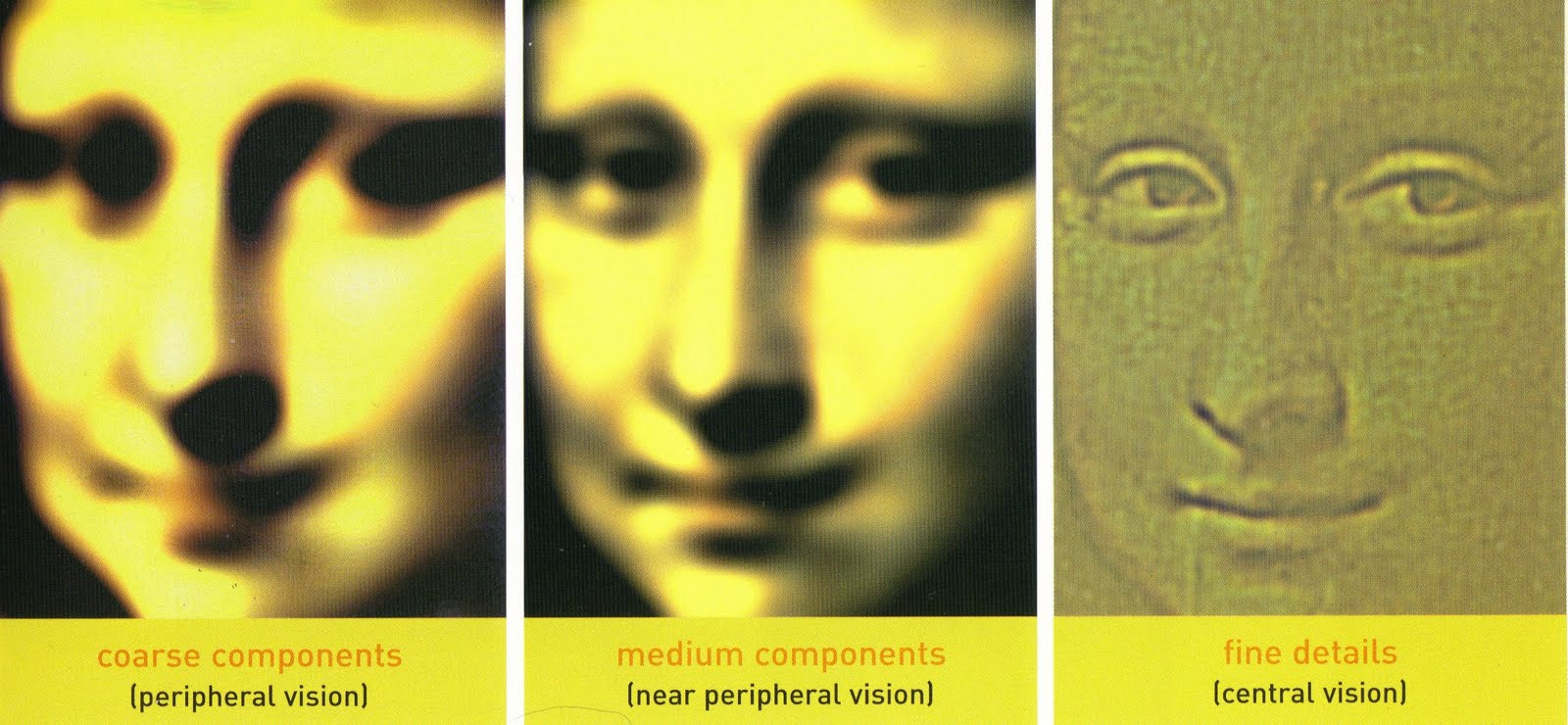 The Artistic Synapse A Mona Lisa Mystery The Science Behind The Smile