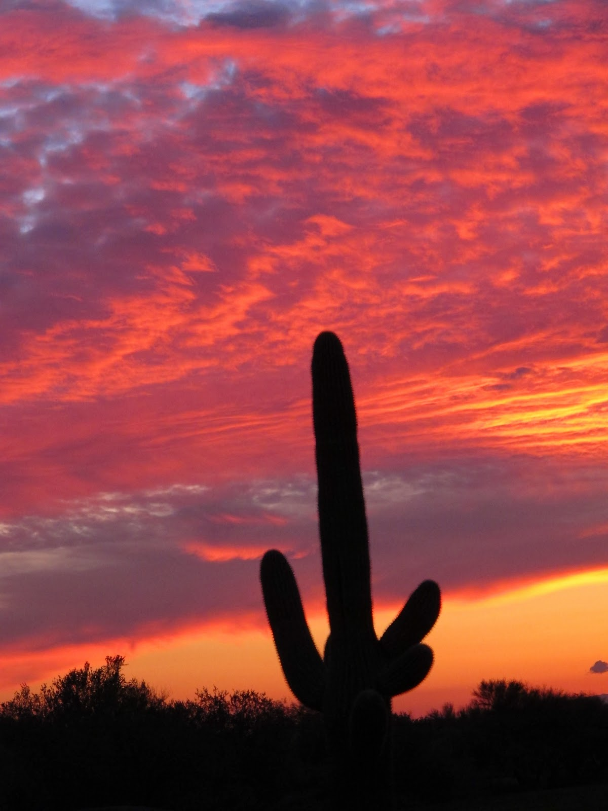 5 Best Places to Explore, Stay, and Eat in Scottsdale, Arizona