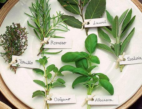 Proyecto tecnico for Tipos de hierbas medicinales