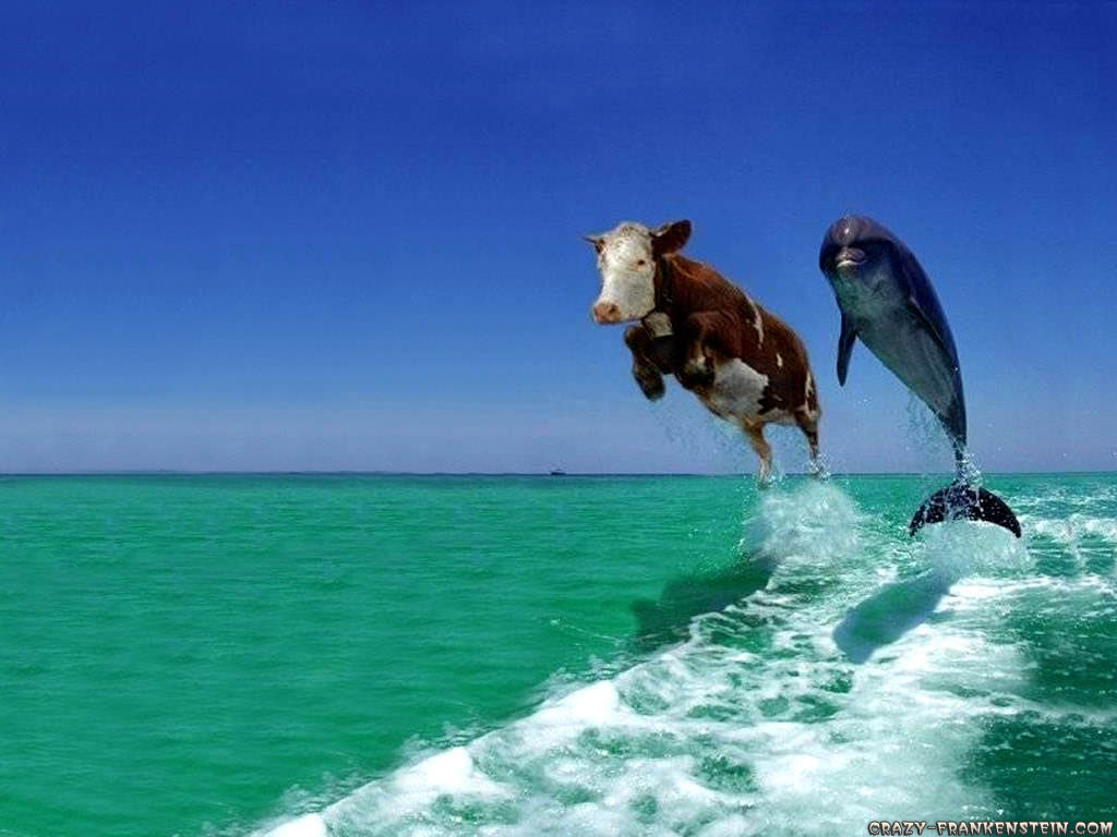 cow-and-dolphin-fake-comedy-funny-animal-wallpapers.jpg