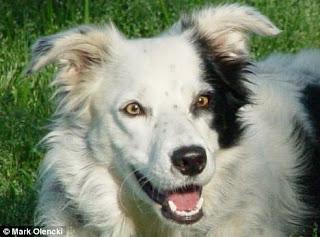 chaser-el-perro-mas-inteligente-del-mundo