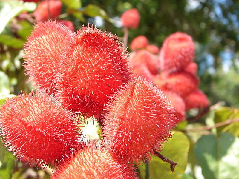 flores raras Cuidar de tus plantas es facilisimo com - Fotos De Flores Raras E Exoticas