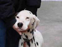 aiutare i canili di Firenze