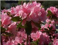 mostra dei fiori giardino orticoltura Firenze