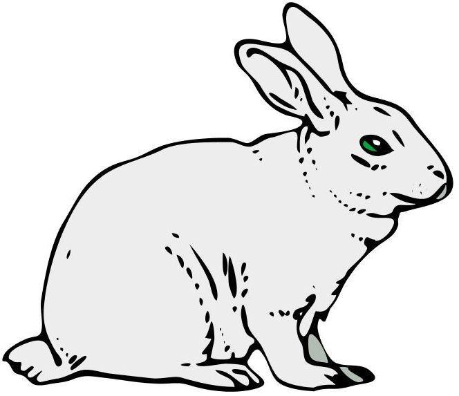 Dibujos de conejos para colorear e imprimir - Imagui