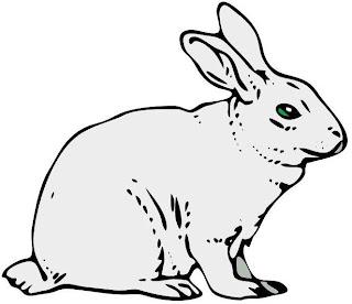 Imagen de un conejo de perfil