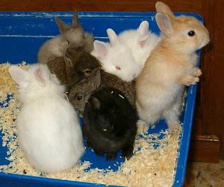 Conejos pequeños comiendo