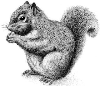 Dibujo de una ardilla en grises
