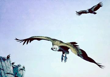 Imagen de buitres volando