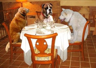 Perros cenando