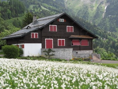 One Big Yodel Spring Swiss Flower Tours
