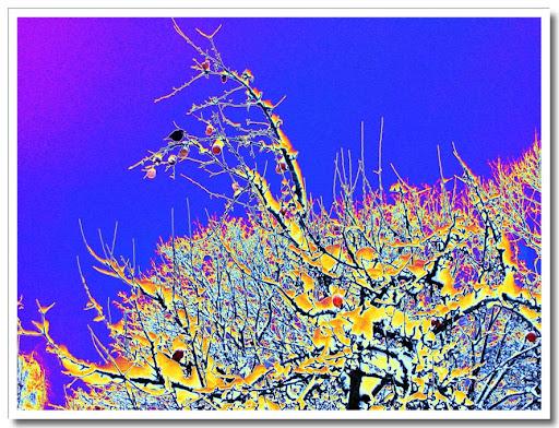 Träd solariserat med färgkurvor