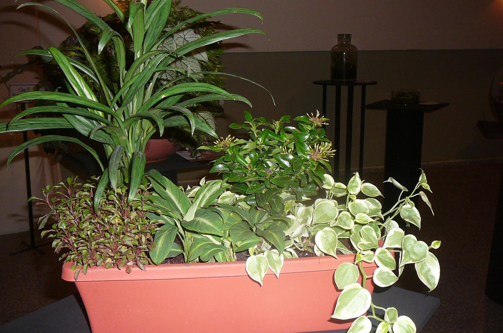 Mis plantas en panam plantaciones combinadas jardineras - Plantas para jardineras ...