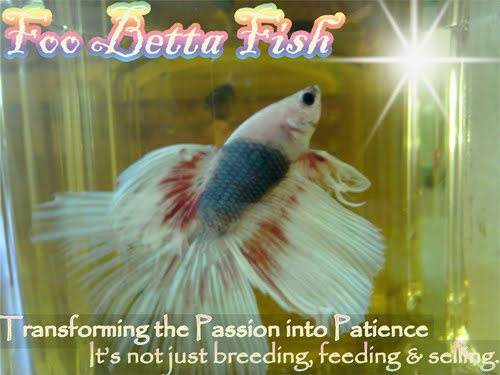 All About Betta Fish