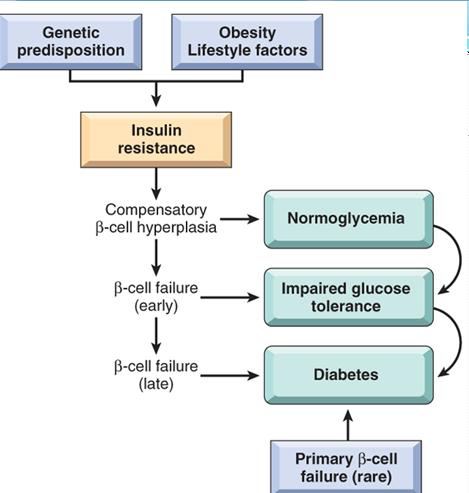 diet dislipidemia + jantung