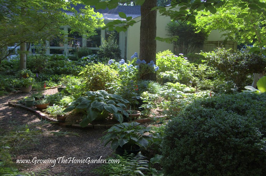 Gallery For Hosta Garden Layout Ideas