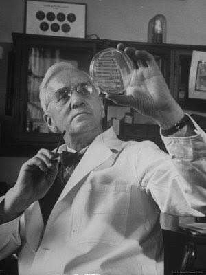 external image 756261~Portrait-of-Bacteriologist-Alexander-Fleming-at-Work-Posters.jpg