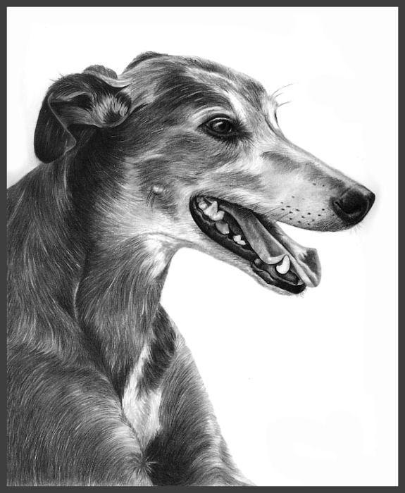 [greyhound+resize.jpg]