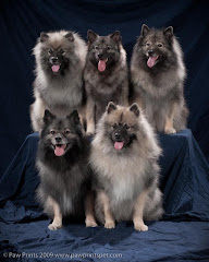 The Keeshond Posse