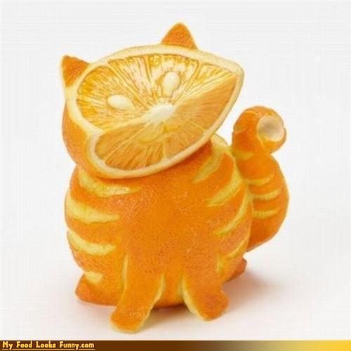 http://1.bp.blogspot.com/_P1I-Or2ze18/TR36oAdv0VI/AAAAAAAAFrs/rbwgUnJGJ7A/s1600/orange+cat.jpg