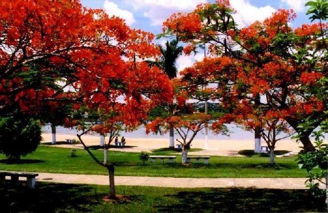 É Primavera em Lagoa da Prata - Minas...