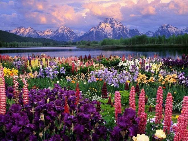 ***  Um Jardim Encantado   ***