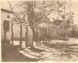 LAS MERCEDES DEL LLANO.1950.