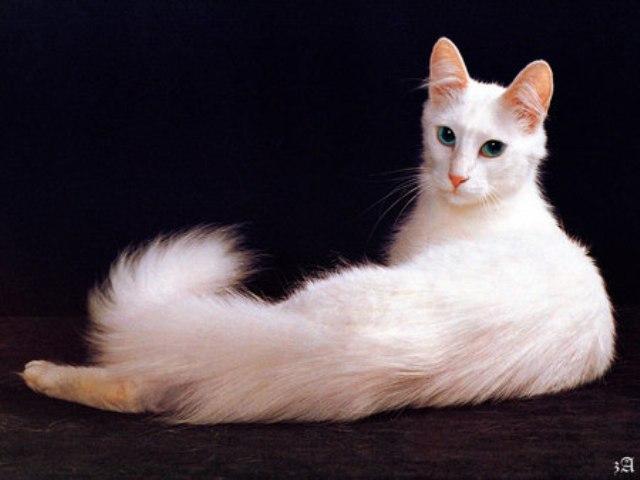465805 - Cute Cat....