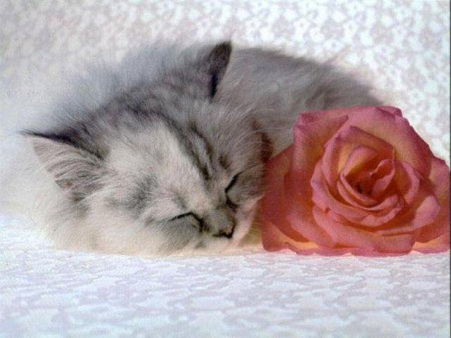 448038 - Cute Cat....