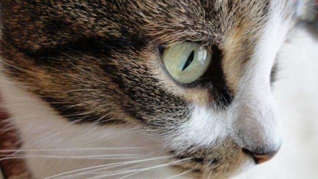 389369 - Cute Cat....