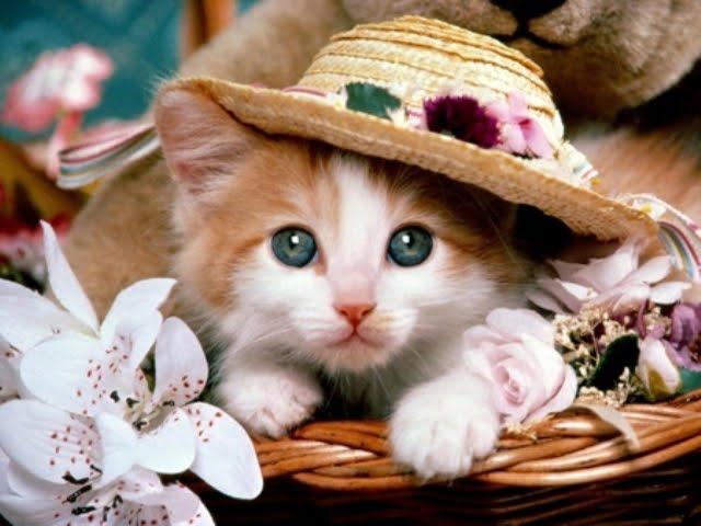 366383 - Cute Cat....