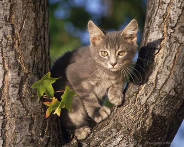 331551 - Cute Cat....