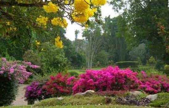 Investsrilanka tourists visit sri lanka botanical gardens for Home garden design in sri lanka
