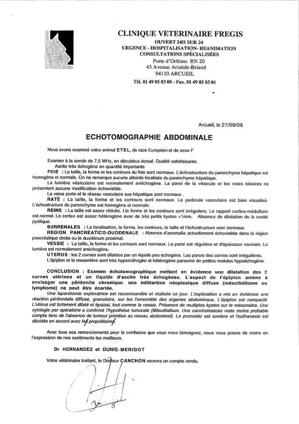 Clinique vétérinaire Échotomographie abdominale Où Ai-Je La Tête ?