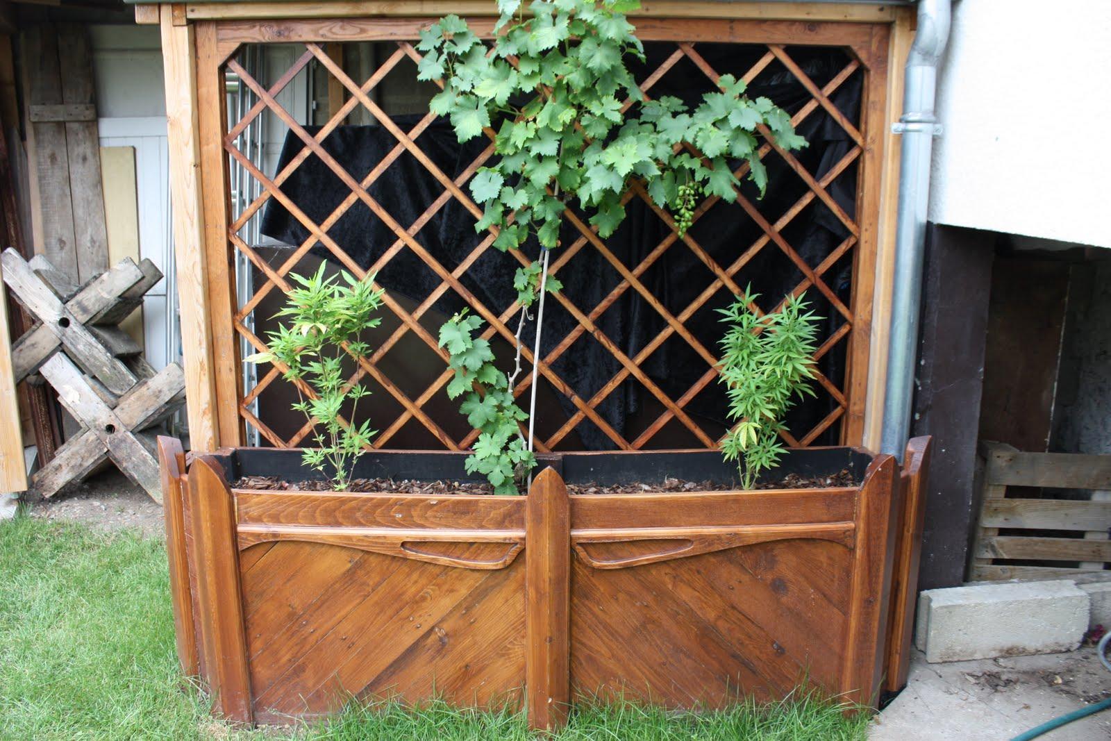 Phil le celte la jardiniere et son treillis suite et fin - Jardiniere treillis ...