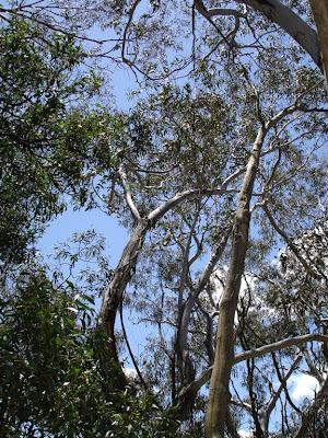 Proses Penyerapan Air dan Mineral Dari Tanah oleh Tumbuhan