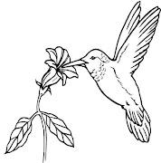 Pássaros para pintar (animais )