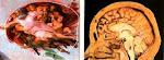 Michelangelo e a representação do cérebro