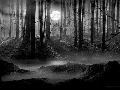 Buscando la salida... Darkforest