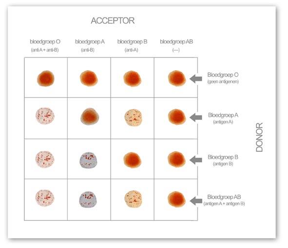 bloedgroep testen thuis