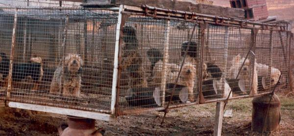the portuguese water blog puppy mills
