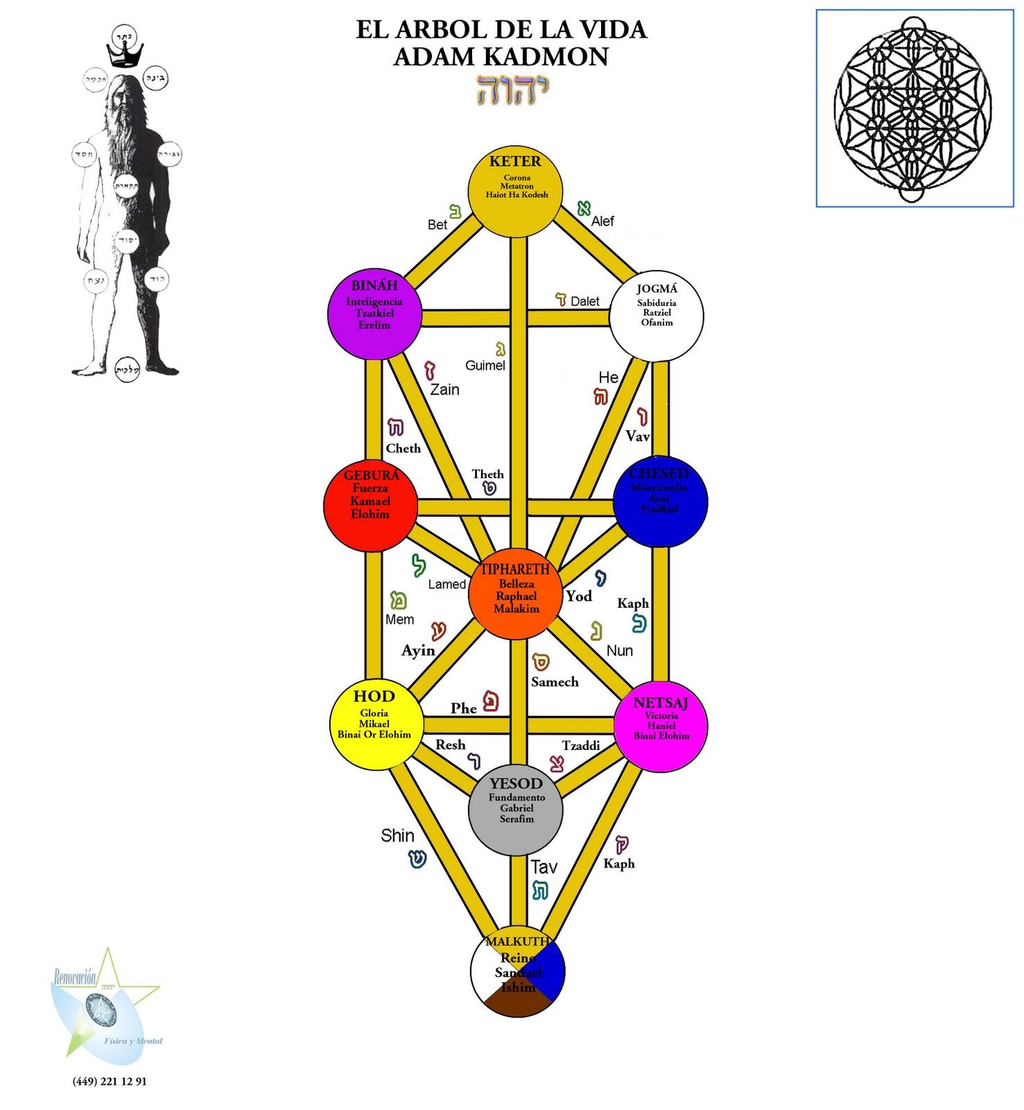 http://1.bp.blogspot.com/_PAb_7qo6vtA/TRlB1tBtvQI/AAAAAAAAAEQ/Loq4gT-ry88/s1600/ARBOL+DE+LA+VIDA+PARA+CLASE+A+COLOR+CON+NOMBRES.jpg