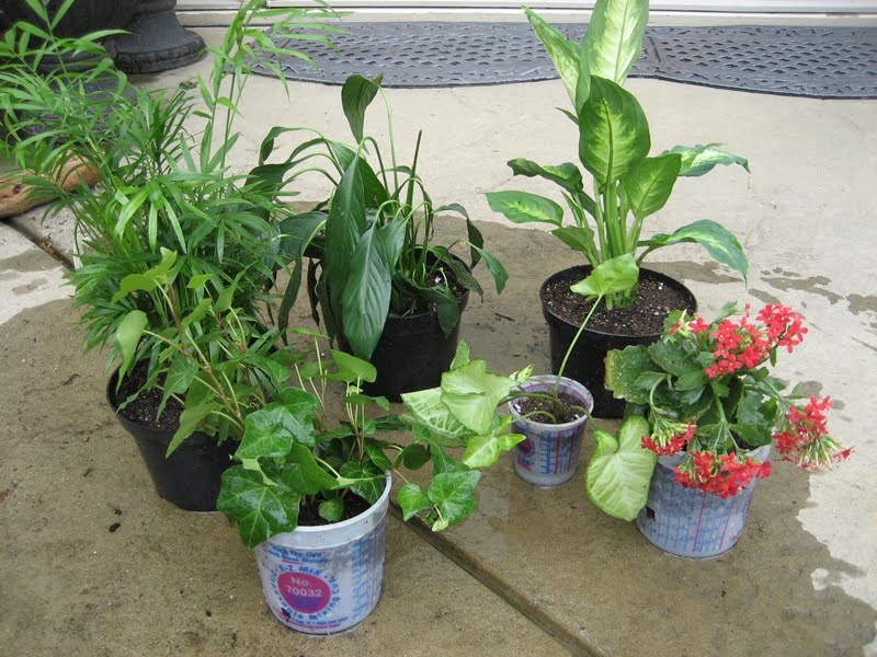make money selling plants this idea i tried several years ago when we were planning on having a garage sale a few months before the sale i started a