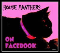 Prowl with us on Facebook