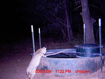 Freaky Trail Cam http://www.amyoops.com/2009/04/trail-cam-pictures-in-south-texas.html