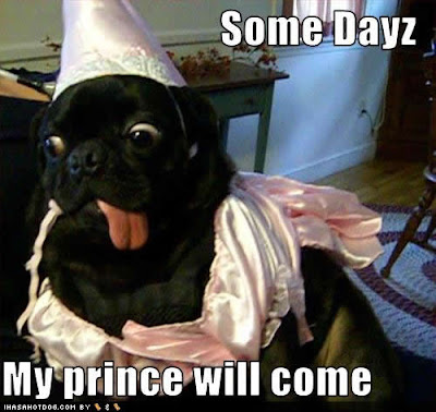 funny-dog-pictures-prince-come.jpg