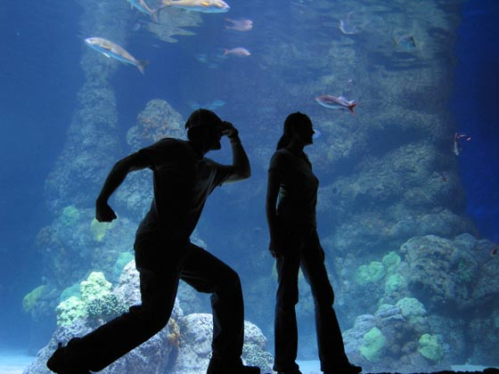 A couple at the Denver Aquarium posing with coral and fish as their background.