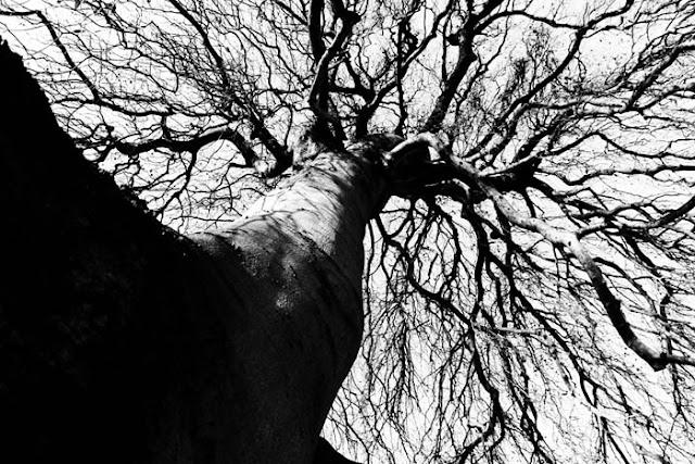 A very dense tree in a park in Nijmegen, Holland.