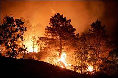 http://1.bp.blogspot.com/_PHN4nA2asRM/S9HQjtBrNoI/AAAAAAAAHV0/aJAoCdQ7NzQ/s1600/trees_burn.jpe